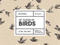 Flocks of birds, sketch style - FREE Download