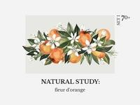 NATURAL STUDY: fleur d'orange set l