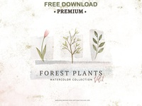 Free Premium Download - Watercolor Forest Plants