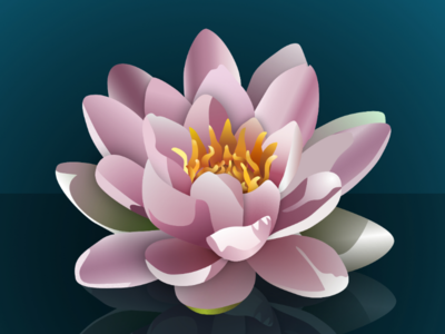 Lotus flower realistic vector vector drawing affinity designer made in affinity lotus