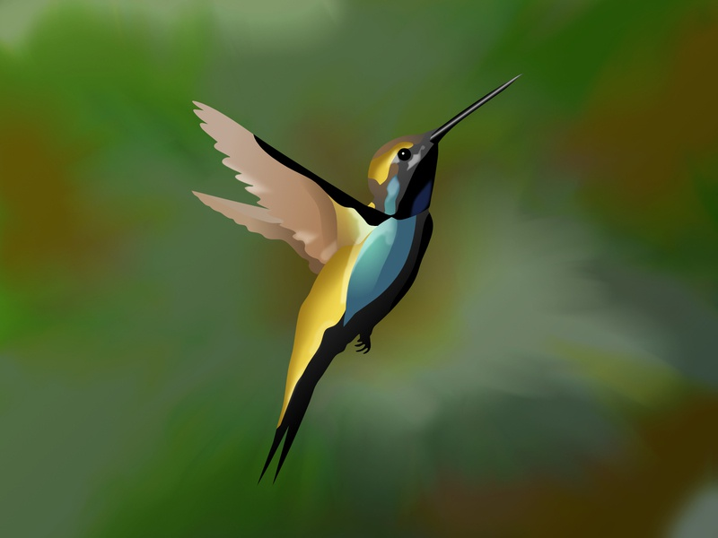 Hummingbird vector drawing vector art bird illustration bird colibri hummingbird affinity designer