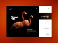 Bird Sanctuary : Website design concept