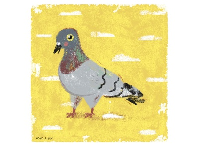 Pigeon animal bird texture pastel digital photoshop design illustration mixed media art