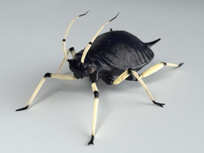 Black bean aphid creepy creature game illustration design 3d model bug insect unity low poly 3d