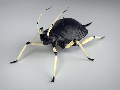 Black bean aphid animated creepy nature creature insect cinema4d c4d unity low poly game 3d walkcycle animation animal