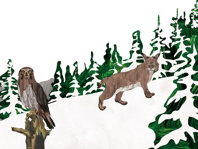 The Lynx nature illustration digital children eagle lynx character books book art animal