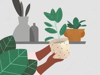 Plants & Ceramics