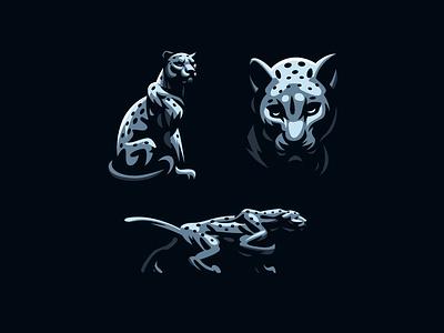 Leopard panther leopard cat wild puma
