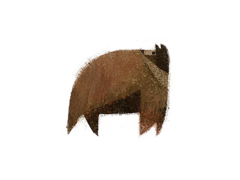 bear texture forest animals bear