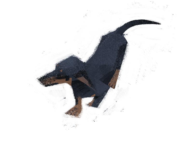 dachshund texture dog dachshund