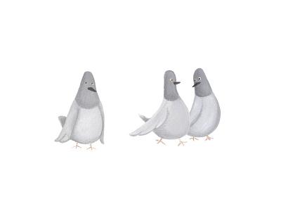 New York Pigeons