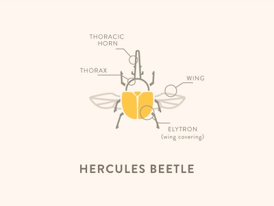 Hercules Beetle Anatomy coffee hercules insects anatomy icon beetle
