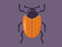 Honey Bee-tle spot illustration vector insect bug beetle