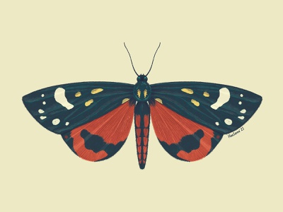 Scarlet tiger moth (Callimorpha dominula) bug insect entomology procreate illustration butterfly moth