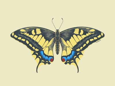 Swallowtail butterfly moth swallowtail illustration procreate insect entomology butterfly