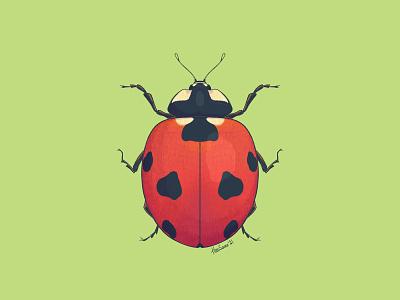 Seven-spot ladybird insect ladybird ladybug entomology illustration procreate