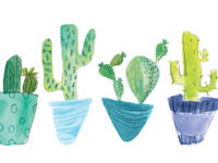 illustration of cacti