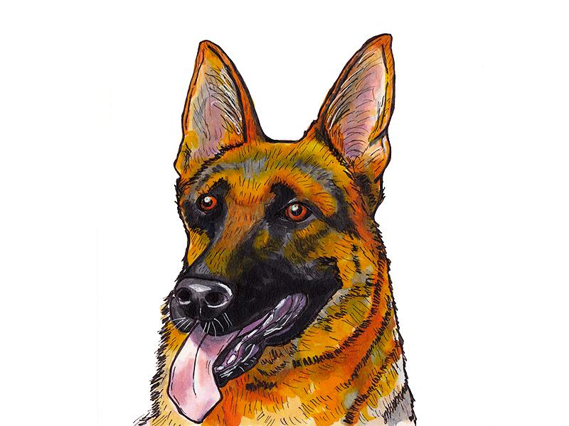 German Shepherd art copics german shepherd dog illustration