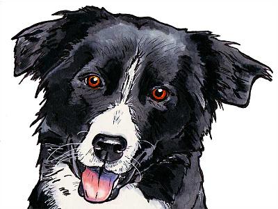 Border Collie border collie drawing marker dog illustration