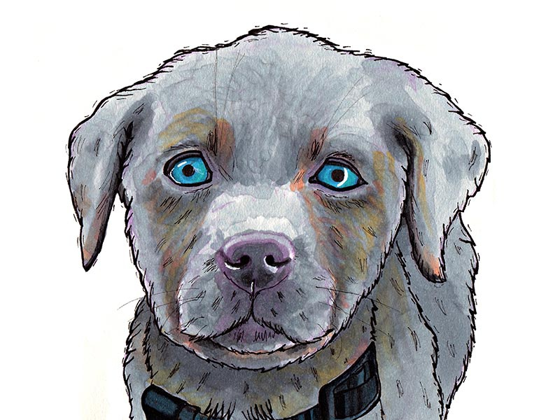 Silver Lab silver lab drawing marker dog illustration