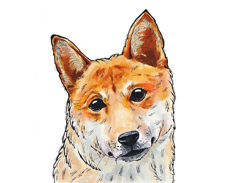 Shiba Inu shiba inu drawing marker dog illustration