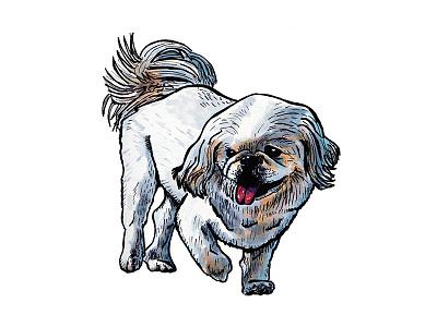 Pekingese drawing marker pekingese dog illustration