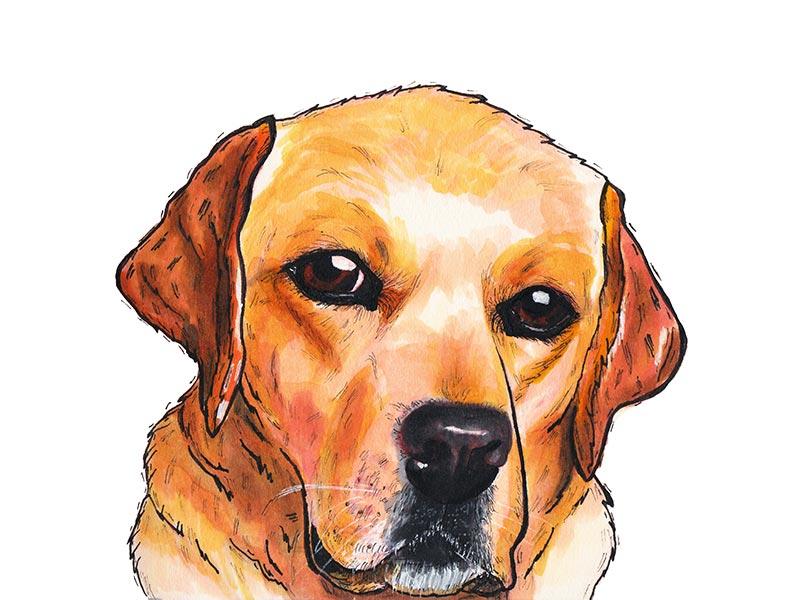 Yellow Lab yellow lab marker dog illustration
