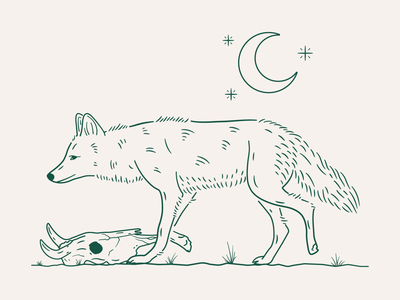 Coyote procreate west plants desert apathy skull cow stars moon green illustration coyote