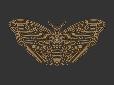 Moth animal illustration flat detail butterfly moth line