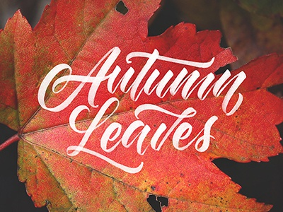 Autumn Leaves calligraphy fall leaf leaves autumn handlettering lettering