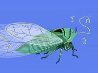 The New Zealand Bug Book: Cicada