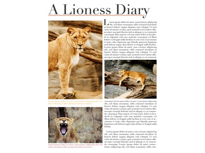Lioness diary