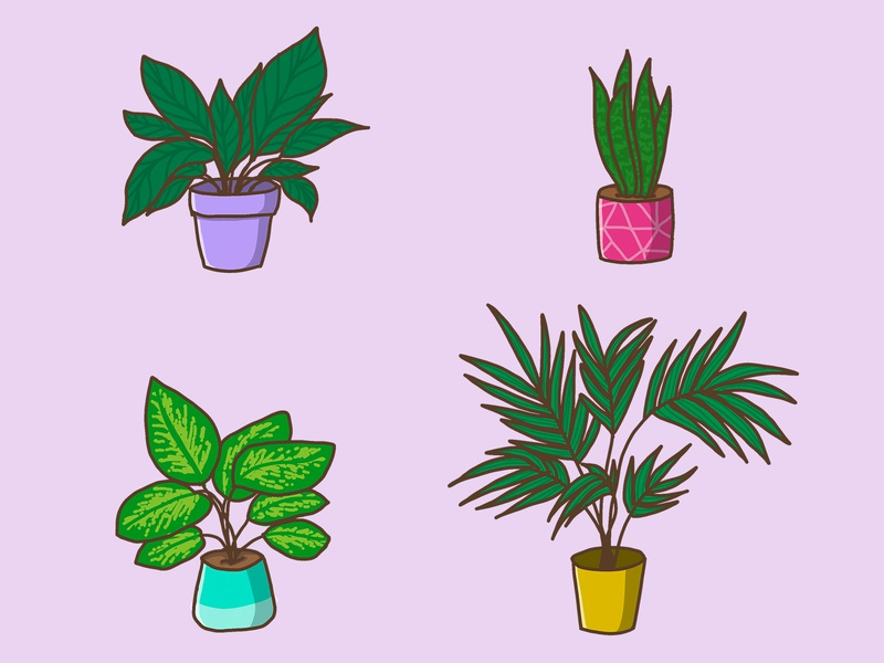 My favourite Houseplants procreate ipad pro drawings draw plants design colorful drawing illustration