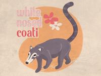 White Nosed Coati
