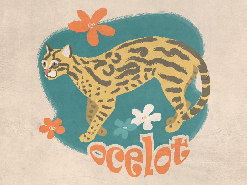 Ocelot wildlife nature cats digital vector vintage retro ocelot animals illustration