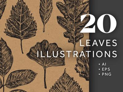 20 Leaves Illustrations Bundle set png transparent natural nature organic botanical vector pen sketch theme forest leaf leaves tree bundle illustrations hand drawn