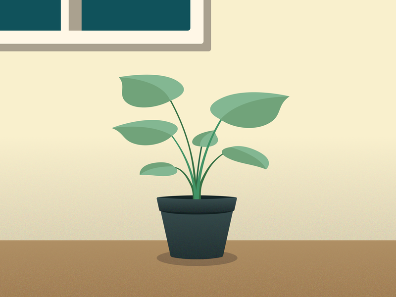 Houseplant photosynthesis rainy workspace desk minimal illustration furniture room greenery flatdesign vector houseplant plant flat illustrator