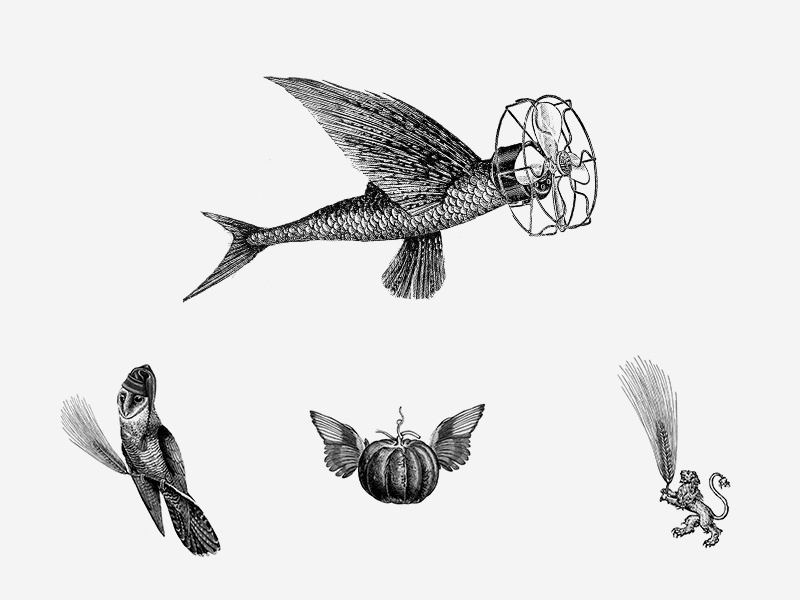 Flyfish