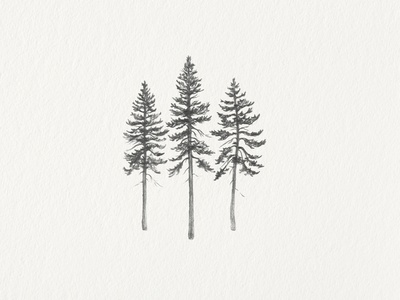 In the Pines pine tree pencil botanical hand drawn illustration