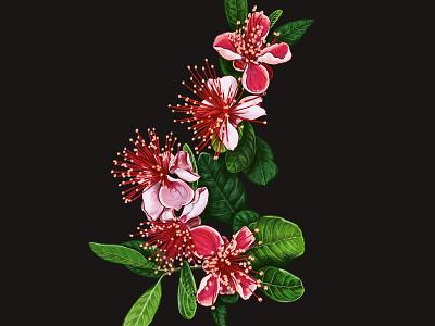 Feijoa pink guavasteen guava feijoa leaves blossom botanical illustration