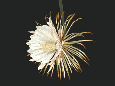 night blooming cereus ipad cactus flower illustration botanical