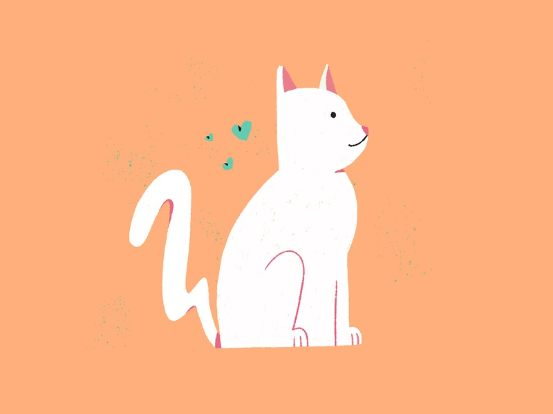 PAMUK cat
