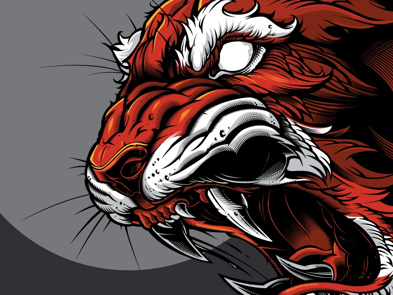 tiger vector by jared mirabile dribbble