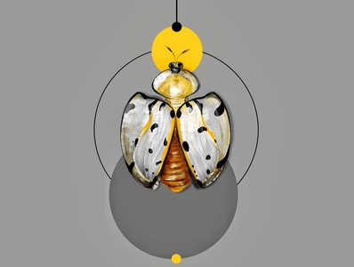 Shape of Insects