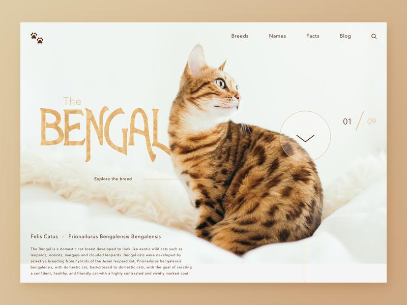 Bengal Cats UI landing page design porn tan brown sketch type color cats design ux interface ui