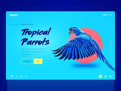 Parrots Website Header vietnam parrot web design split animals yellow blue red tropical summer landing page website header