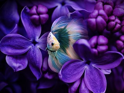 Dreamy Fish illusion concept visual design flowers fish