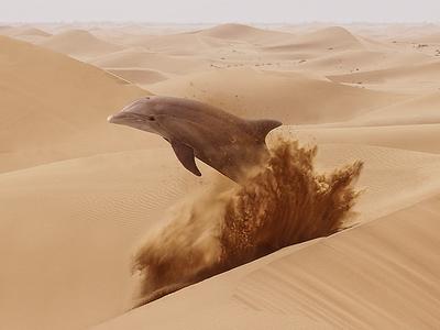Lost Dolphin dolphin desert visual design surrealism
