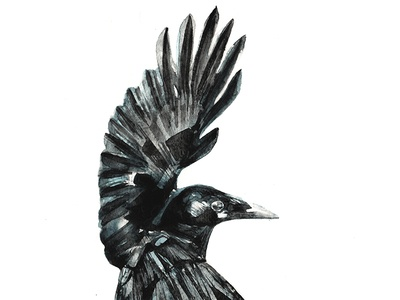 Crow crow illustration art draw paint handmade watercolor watercolour birds