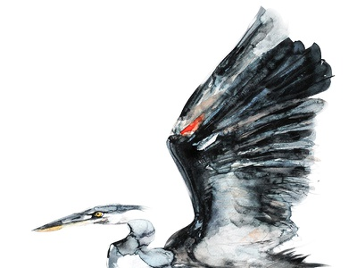 Great Blue Heron greatblueheron heron illustration art draw paint handmade watercolor watercolour birds